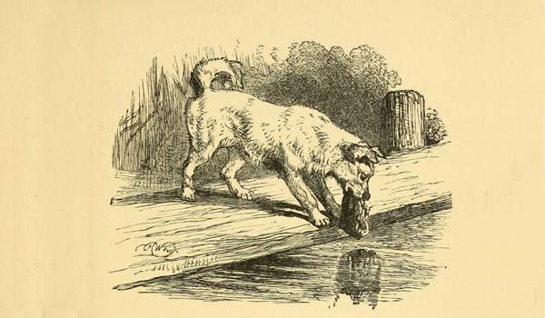 fabula-cachorro-e-o-reflexo