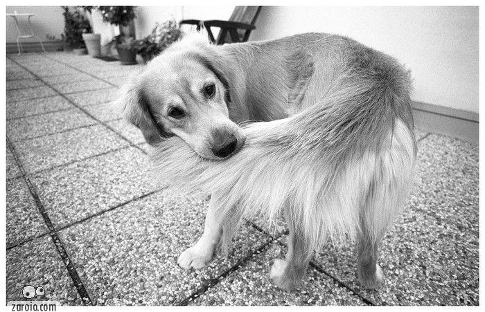 Cachorro-mordendo